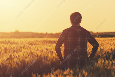 Farmer in ripe wheat field