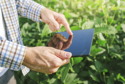 Farmer using digital tablet
