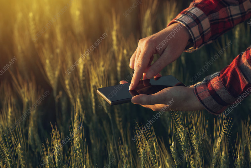 Farmer using smartphone