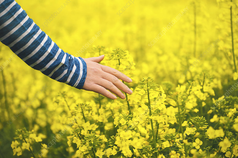 Woman in oilseed rape filed