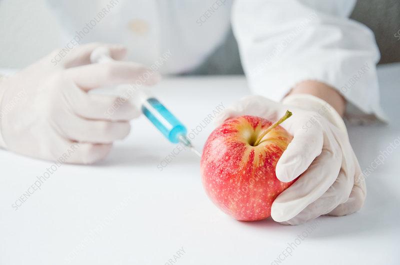 GMO apple, conceptual image