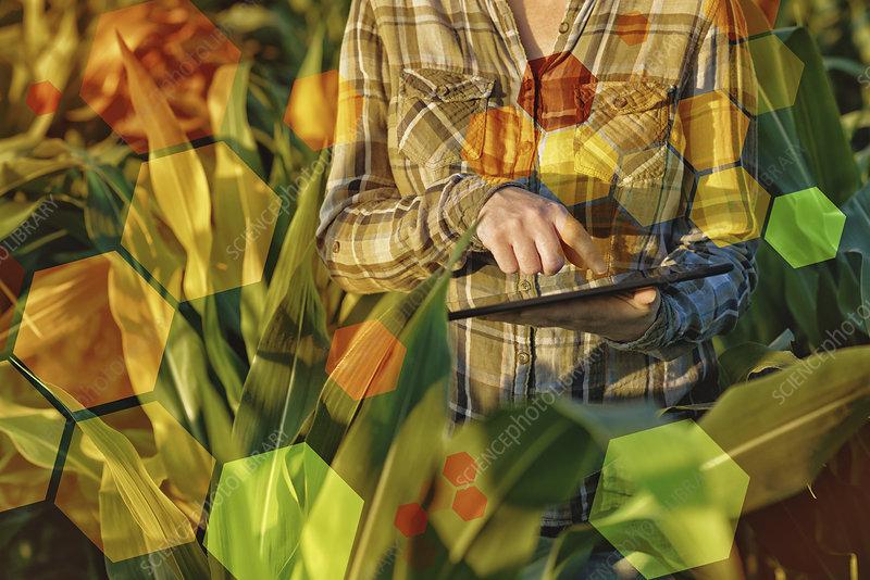 GMO crops, conceptual image