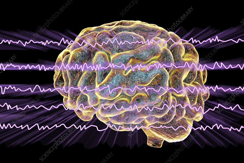 Brain and brain waves, illustration