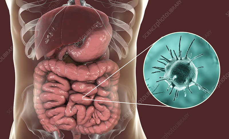 Parasitic microorganisms in human intestine, illustration