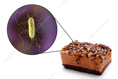 Proteus food poisoning, conceptual illustration