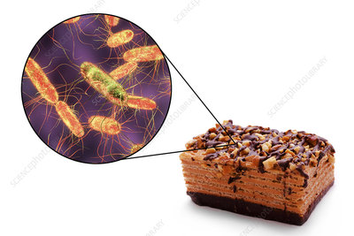 Salmonella food poisoning, conceptual illustration