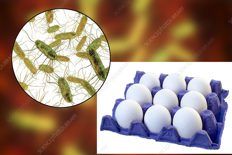 Food poisoning from eggs, conceptual illustration