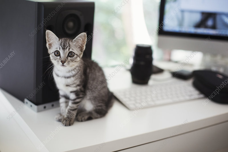 Close up, tabby cat sitting on desk, computer, loudspeaker