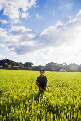 A rice farmer standing in a field of green crops
