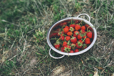 Bowl of freshly picked strawberries