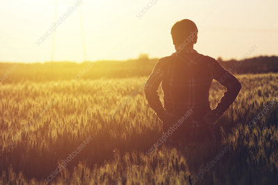 Farmer silhouetted in field