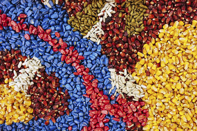 Multi-coloured corn seed
