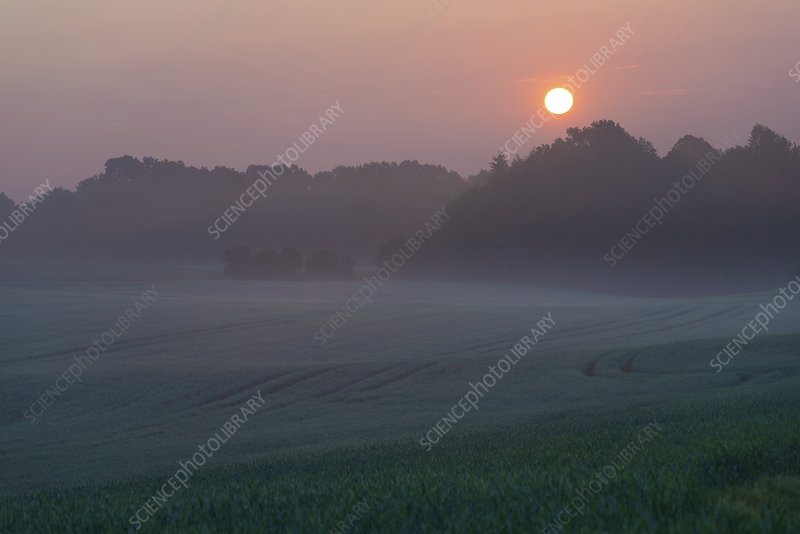Misty rural landscape at sunrise