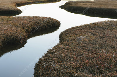 The open spaces of marshland and water channels