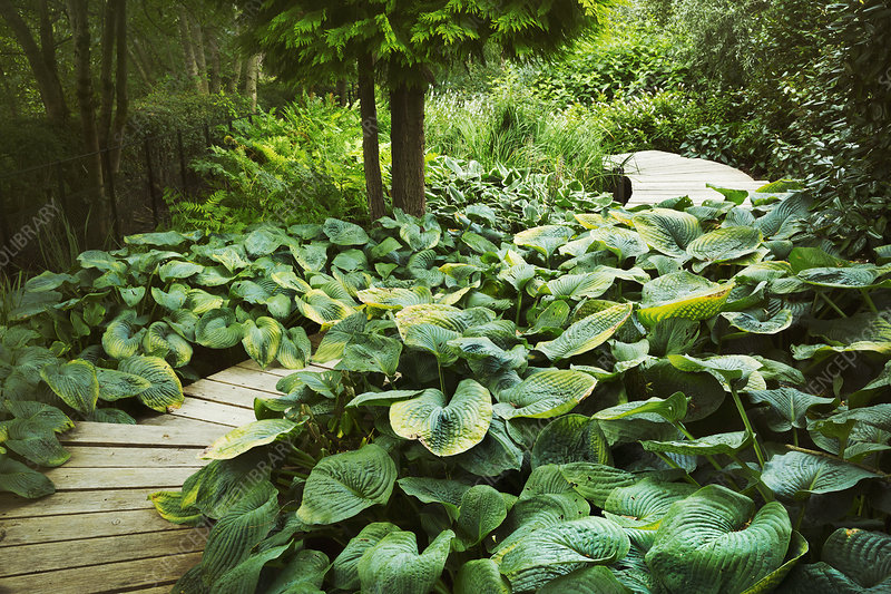 Exotic plants with large green leaves