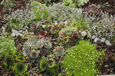 Flower bed with selection of succulent plants
