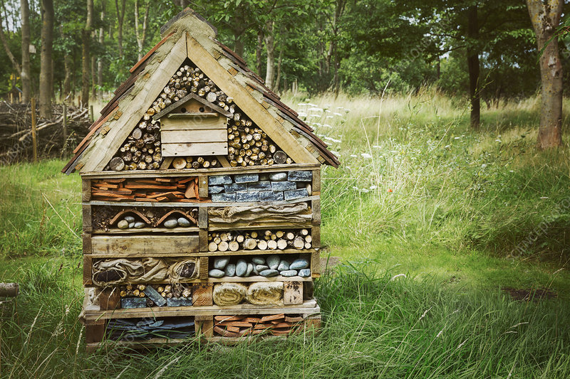 Large bug house
