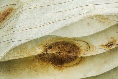 Knothole in a piece of wood