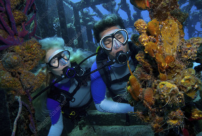 Divers observe marine life at shipwreck