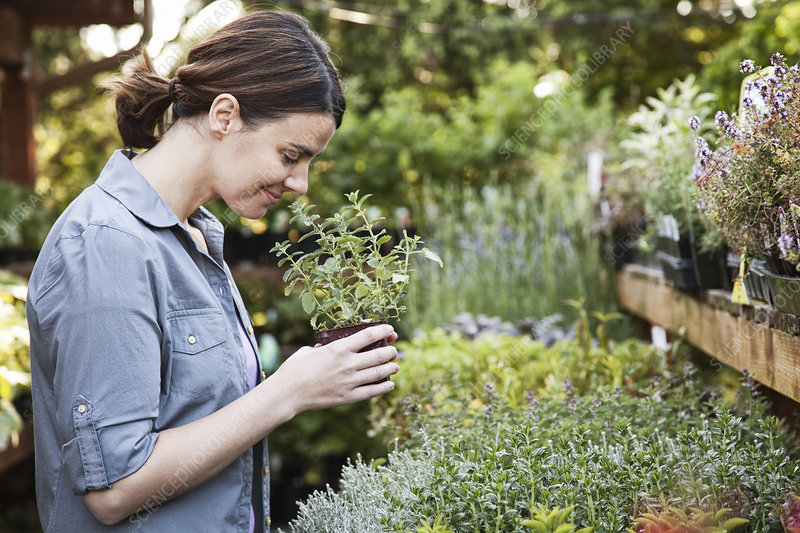 Woman holding a small aromatic herb