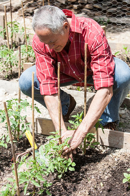Man planting tomato seedlings