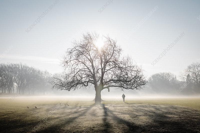 Lone tree on frosty Peckham Rye Common, London