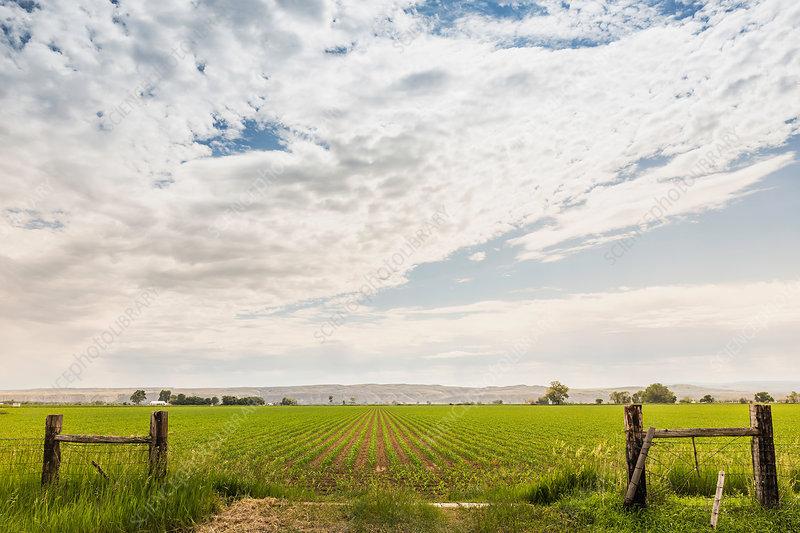 Bright cloudscape over flat rural landscape, Montana, US