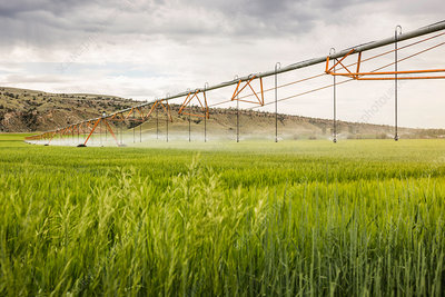 Irrigating agricultural land, Montana, US