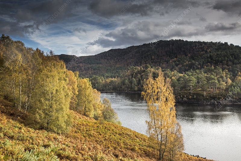 Landscape with autumn trees and river, Scotland