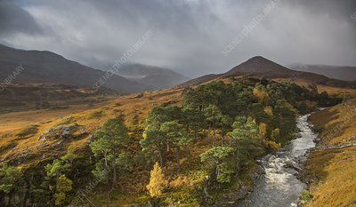 Tranquil glen landscape and river, Scotland