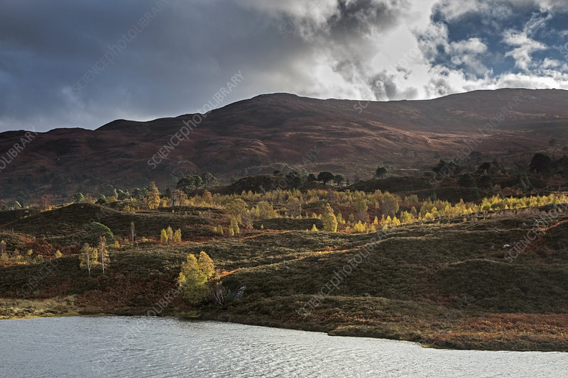 Tranquil autumn landscape, Glen Cannich, Scotland