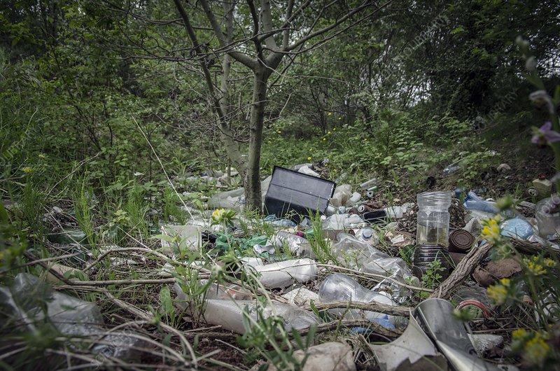 Plastic waste dumped in urban wood