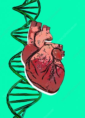DNA strand and human heart, illustration