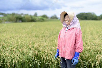 Woman wearing blue rubber gloves standing in a rice field