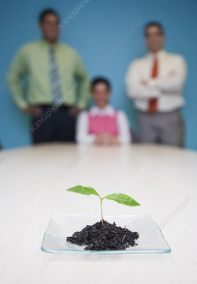 Business team looking at a single plant seedling, a metaphor