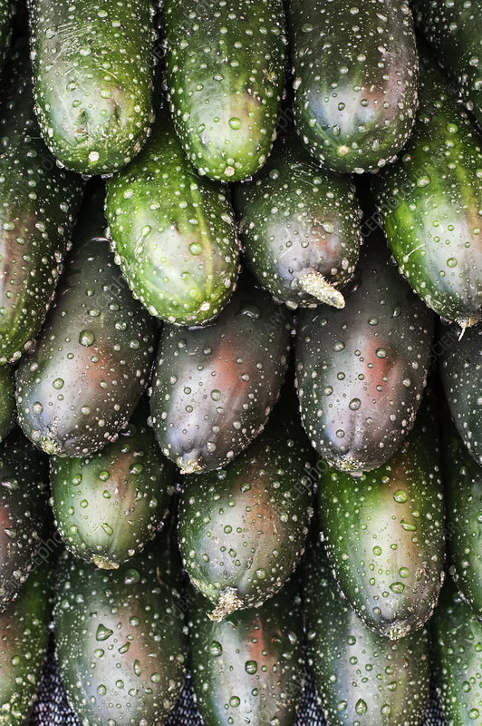 Stack of fresh cucumbers at a fruit and vegetable market