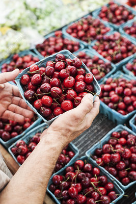 Person holding punnet with fresh red cherries at a market