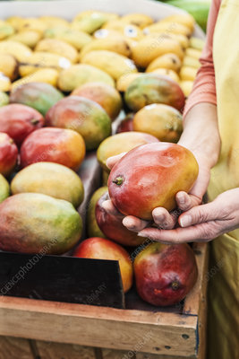 Person holding fresh mango at a fruit and vegetable market