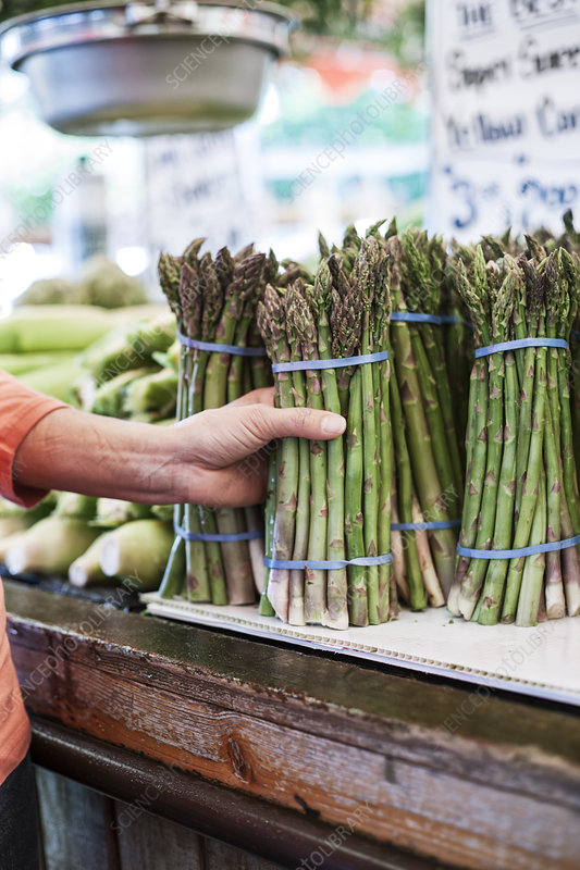 Hand holding bunch of fresh green asparagus at a market