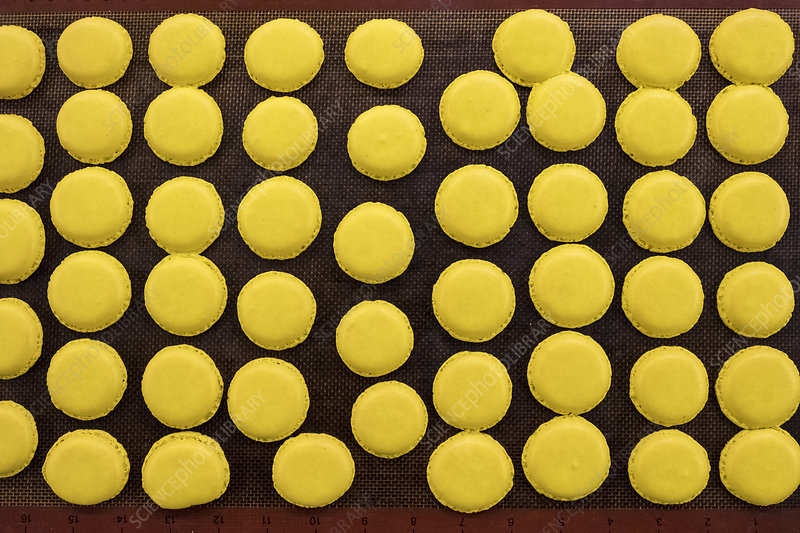 Trays of small round yellow baked biscuits or macarons