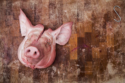 Slaughtered pig's head on wooden butcher's block
