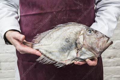 Fishmonger wearing apron holding a fresh John Dory fish
