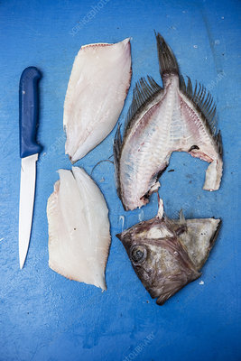 Filleted John Dory fish and knife on blue chopping board