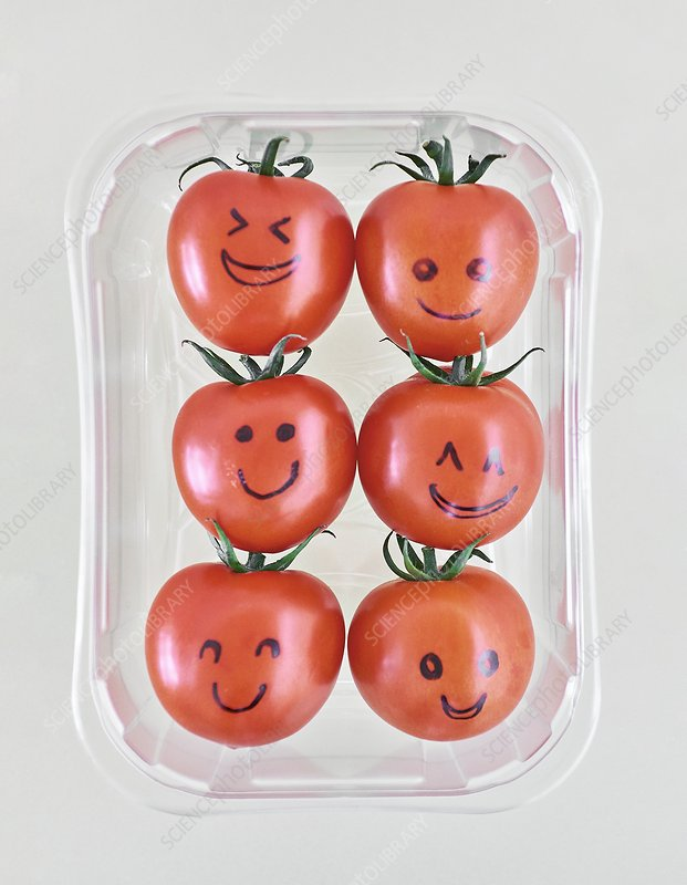 Tomatoes in plastic container