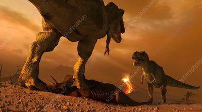 Tyrannosaurs fighting over prey, illustration