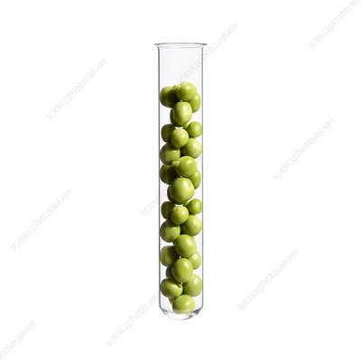 Peas in test tube