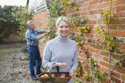 Portrait mature woman harvesting apples in garden
