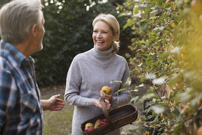 Happy mature couple harvesting apples in garden