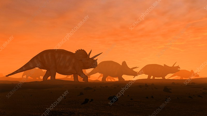Herd of triceratops, illustration