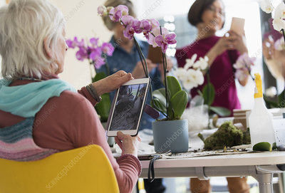 Senior woman photographing orchid